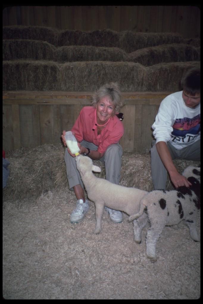 on a working sheep farm
